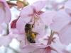 mesure contre les causes des problèmes de disparition des abeilles