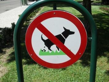 comportement du chien ou du maître