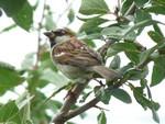 oiseau dans arbre