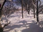 Batna en hiver