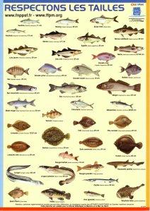 Tailles minimales des poissons