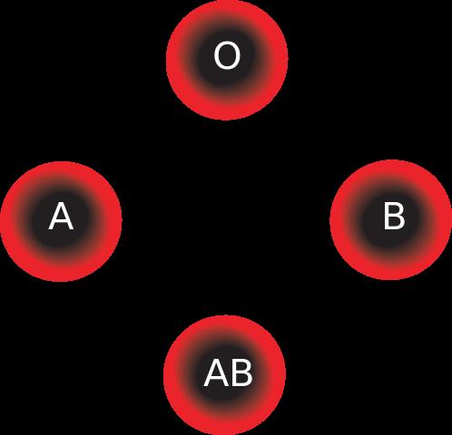 compatibilités sanguines