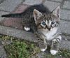 chaton dans la ville