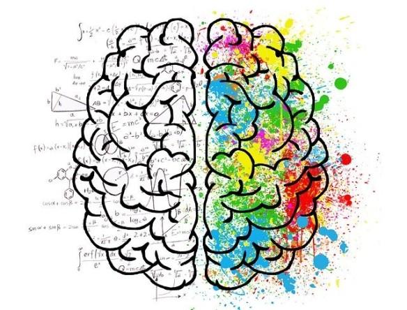 cerveau gauche et cerveau droit
